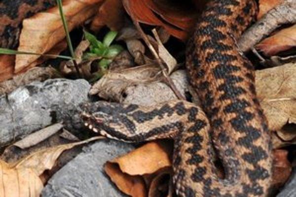Hady sú po zime už aktívne.
