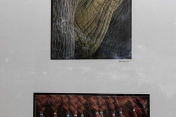 Tvorba Ľubice Kremeňovej. Výstava potrvá ešte do 4. januára, následne bude reinštalovaná.