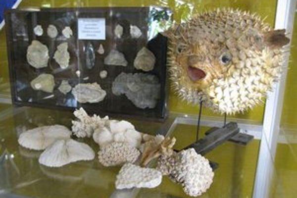 Podmorská krása. Aj takéto nádherné živočíchy obývajú tropické moria.FOTO: archív BZ
