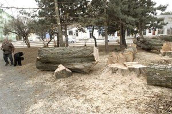Stromy dožívajú. Takýto pohľad nenecháva ľudí pokojných.