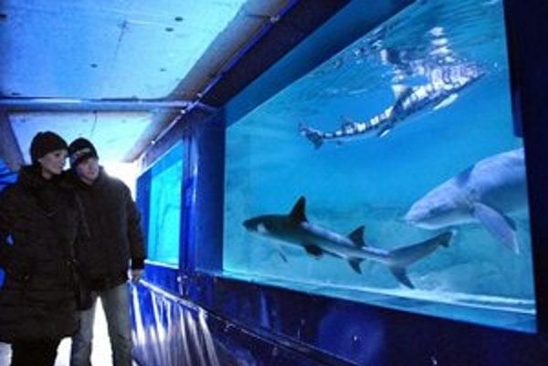 Návštevníci majú možnosť cez sklo spoznať faunu morí a oceánov.