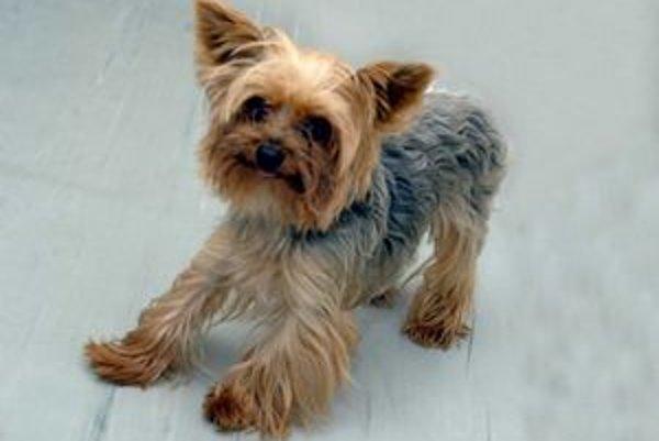 Staromestská súťaž psov sa uskutoční v utorok 28. júna od 16. hod.