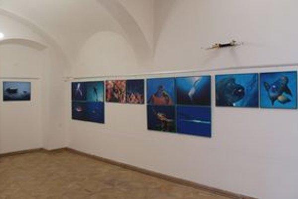 Podmorská krása. Aktuálne ju nájdete vo FotoGalérii NOVA.