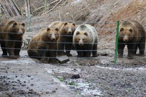 Bolo nás päť. Spoločné foto legendárnych medvedích pätorčiat z prvých rokov života. Zajtra oslávia deväť rokov. Traja v Košiciach, dvaja na ranči v Čechách.