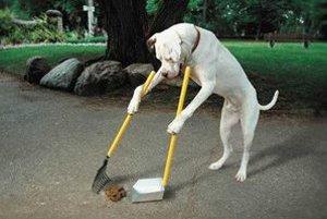 Pes to vedieť nemusí, ale jeho majiteľ určite áno...