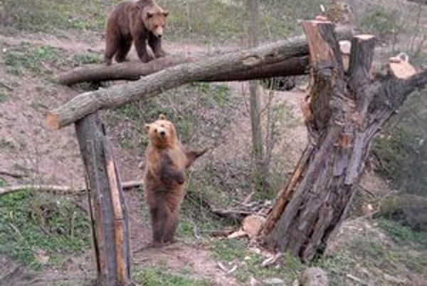 Akční medvedíci. Ako sme sa presvedčili, nový druh činnosti macov nielen zaujal, ale aj veľmi chutil. Sú to špekulanti a veľkí maškrtníci.