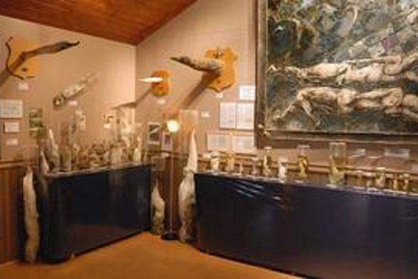 Múzeum penisov patrí k vyhľadávaným atrakciám ostrova.