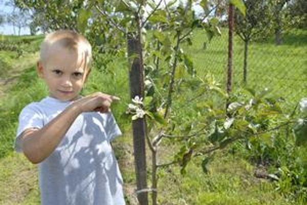 Dávid pri rozkvitnutej jabloni. Také niečo si dedinčania nepamätajú.