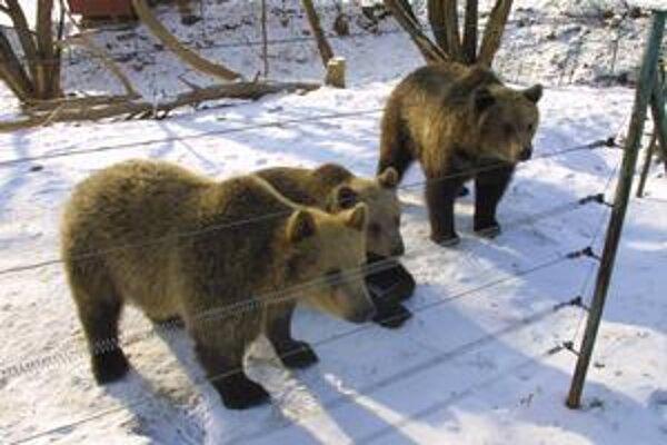 Obdivovateľov a milovníkov zvierat neodradí od návštevy zoo ani zlé počasie.