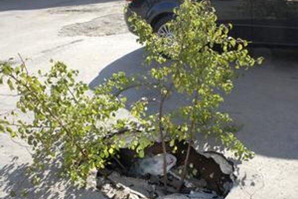 Parkovisko sa prepadlo. Na Ružovej ulici obyvatelia nesadili stromčeky, iba označili prepadlisko. Popoludní na nebezpečné miesto upozorňovala dopravná značka.