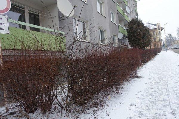 Grešova ulica. Pôvodne lemoval plot celú ulicu.