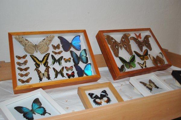 Výstava motýľov. Ukazuje krásy zvieracej ríše.