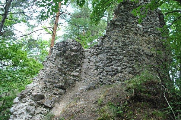 Zvyšky hradu ukrýva les.