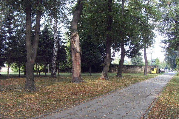 Lúka oproti Domu smútku. Náhradnú plochu na pochovávanie nevytvorili, nemôžu ešte vyrúbať stromy.