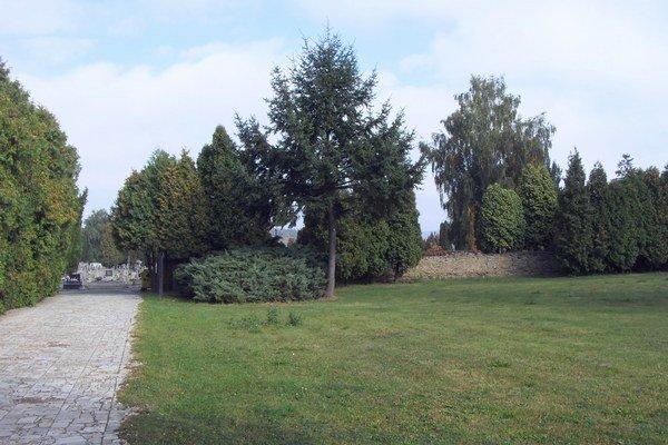 Mestský cintorín. Na tomto mieste odstránia stromy a urobia miesto na pochovávanie.