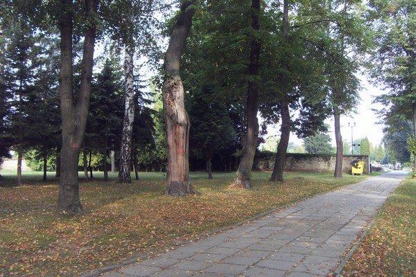 Lúka. Na nej vyrúbu asi 37 drevín, nové vysadia v inej časti cintorína.