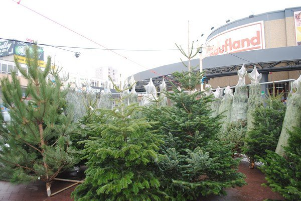 Živé stromčeky sú už v predaji tiež.