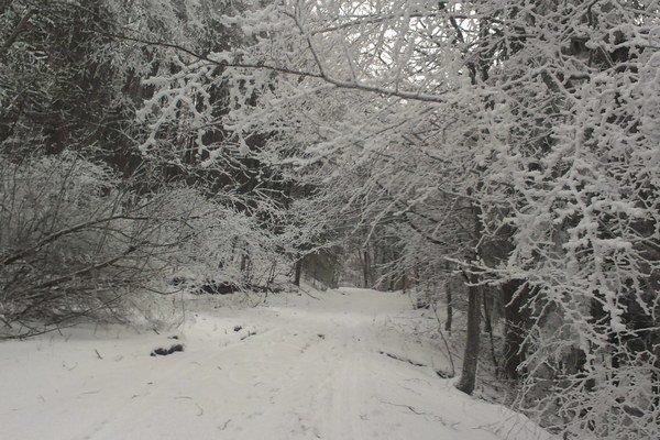 Rozprávkový pohľad. Vianočná bežkárska trasa v Zlatej Bani.