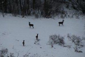 Zver v lese. Musí sa mať na pozore, v zime stráca plachosť.