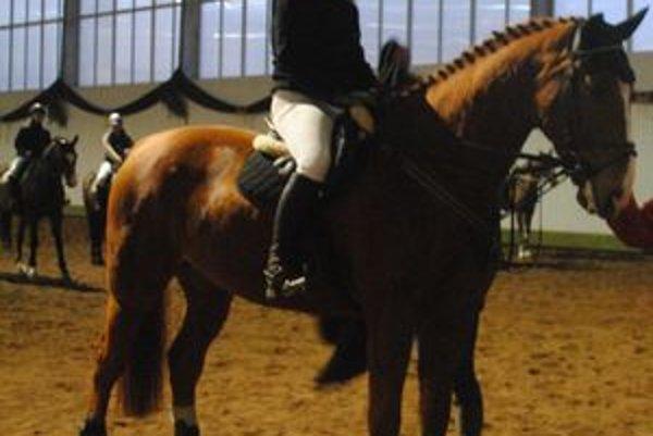 Najsympatickejší prešovský kôň Pedro je slovenský teplokrvník, má dvanásť rokov.