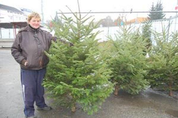 Eva Platková predáva aj stromčeky v kvetináči.
