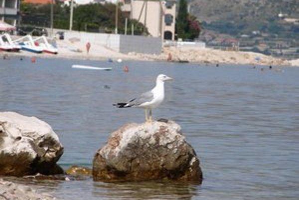 Letná dovolenka v Chorvátsku patrí medzi najobľúbenejšie.