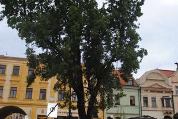 Osemdesiatročný dub je chorý. Jeden už vyrúbali vlani, teraz nasadili nový strom.