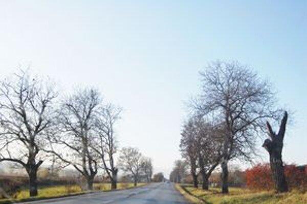 Suché stromy. Ohrozujú premávku.