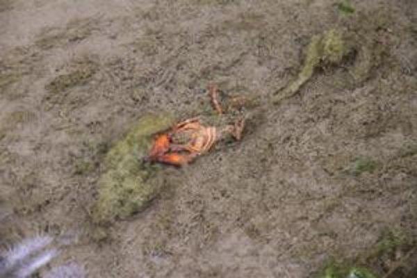 Uhynuté raky. Našli ich na dne rybníka.