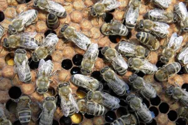 Tohtoročné suché počasie veľmi nepriaznivo pôsobilo aj na produkciu medu.