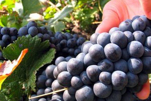 Vinohradníctvo. Spracovanie vína bolo predmetom činnosti obvineného podnikateľa.