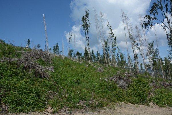 Les nad Slavošovcami. Od kalamity Žofia ubehli dva roky, les sa pomaly začína obnovovať.