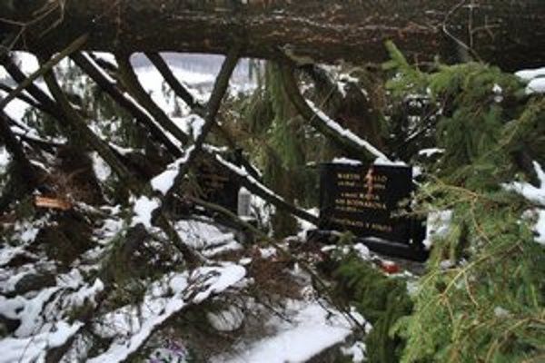 Spúšť. Pod silou mohutných stromov nemali náhrobné kamene šancu ostať celé.