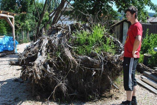 Obrovský koreň stromu. V ňom R. Pažítka okamžite zbadal budúceho sediaceho Budhu.