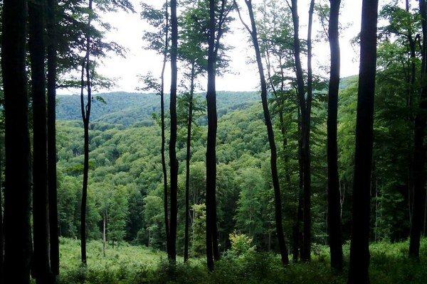 Mestské lesy. Spoločnosť spravuje 2 800 hektárov.