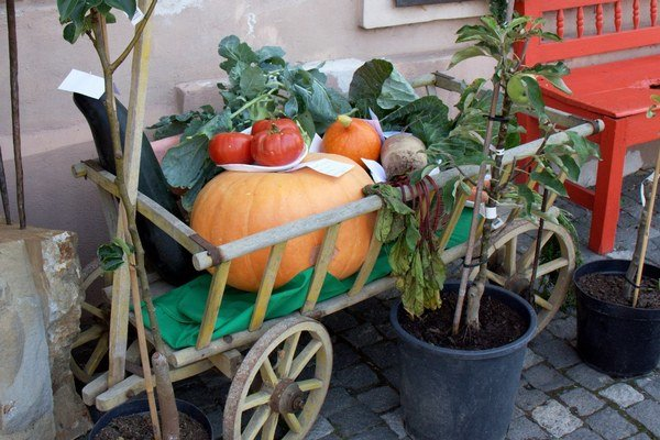 Výstava bardejovských záhradkárov. Originálny historický vozík na zvážanie zeleniny a ovocia.