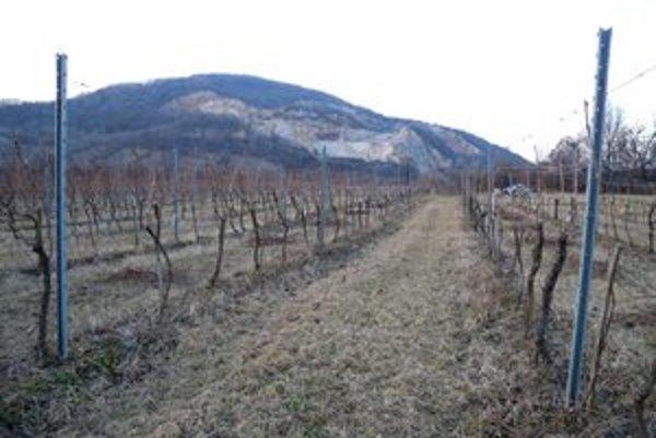 Vinohrady v Brekove.