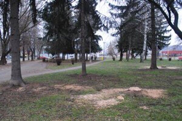 Park pri Karpatii. Spíli v ňom už päť stromov.