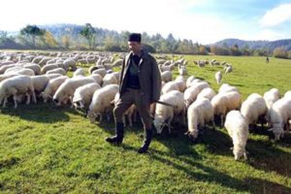 Tradičnej bryndzi z ovčieho syra konkuruje lacnejšia s väčším podielom kravského mlieka.