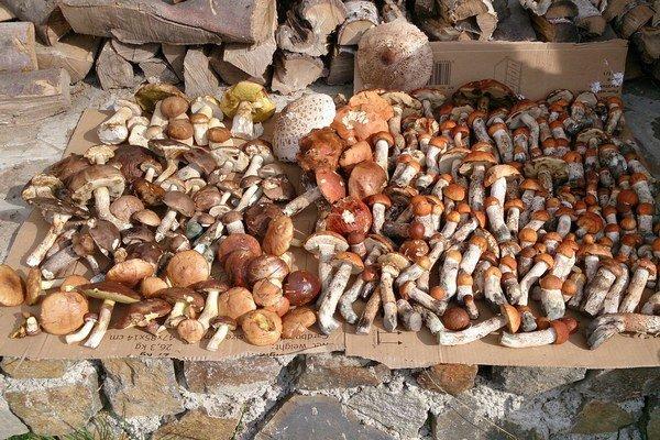Parádna hubačka. Michalovčan Martin Mach nazbieral  v lese za tri hodiny 168 červeňákov, 34 suchohríbov, 28 masliakov a 12 dubákov.