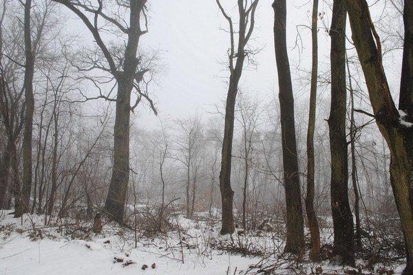 Les Biela hora. Polovicu lesa s rozlohou 30 hektárov núkajú vlastníci mestu Michalovce za 1 euro.