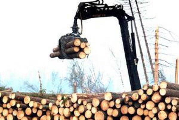 Súkromné fimy sa sťažujú, že od štátu nemôžu kúpiť dostatok dreva. Veľa ho sľúbil jednej.