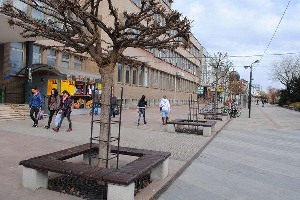 Pešia zóna. Za vyschýnanie stromčekov v centre mesta môže často znečistená voda a chemické prostriedky, ktoré používajú podnikatelia na čistenie svojich prevádzok a vylievajú ich potom v blízkosti stromov.