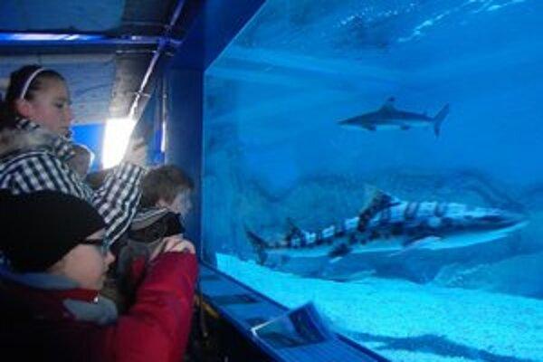Žraloky dorazili do Michaloviec. Návštevníci ich obdivovali so zatajeným dychom.