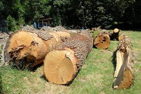 Umenie namiesto biznisu. Aktivisti navrhujú, aby mesto drevo namiesto predaja poskytlo umelcom. Cez ich umelecké diela by 250-ročné duby symbolicky žili ďalej.