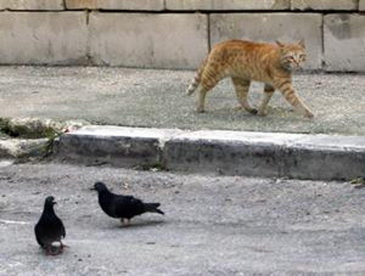Lesbičky s mokrým mačička