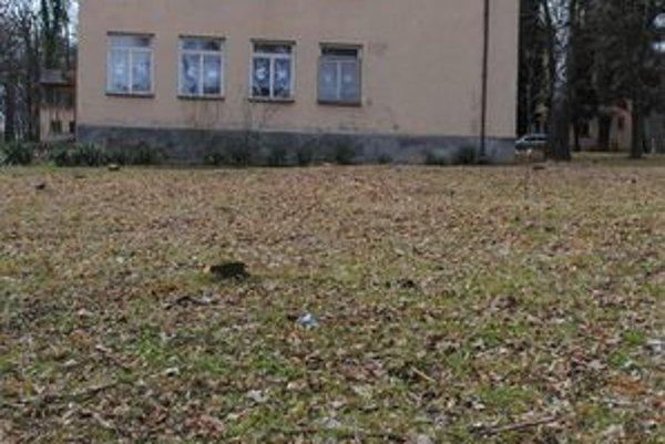 V škole vyrúbali 15 stromov. Podľa vedenia mohli ohroziť zdravie detí.