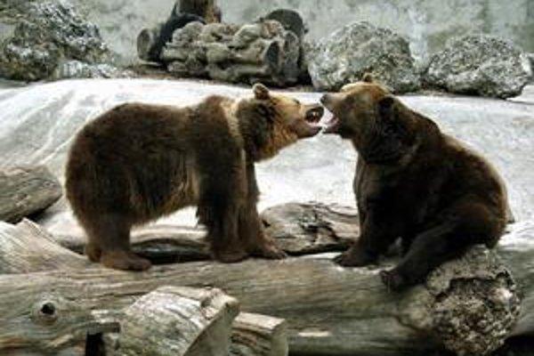 Medveď hnedý. Najviac sa mu páči vo voľnej prírode.