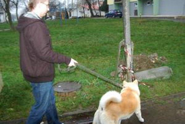 Psa zasiahlo ho 380 voltov, keď sa obtrel o tento stĺp s trčiacimi drôtmi.