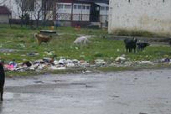 Psy z osady. Odprevádzajú deti až priamo ku škole. Vo svorke sú aj veľké plemená.